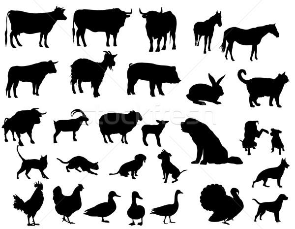 çiftlik hayvanları siluetleri doğa at siyah koyun Stok fotoğraf © Nevenaoff
