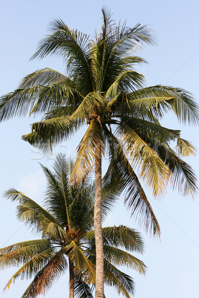 Palms praia ensolarado férias dois crescente Foto stock © newt96