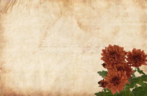 Brązowy papier czerwone kwiaty brązowy starego papieru kwiat streszczenie Zdjęcia stock © newt96