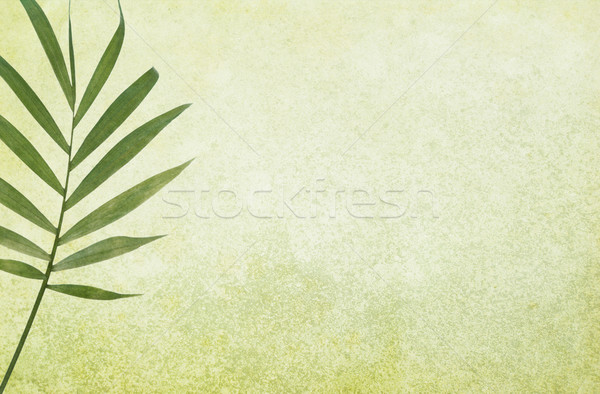 Green Grunge Background with Palm Leaf Stock photo © newt96