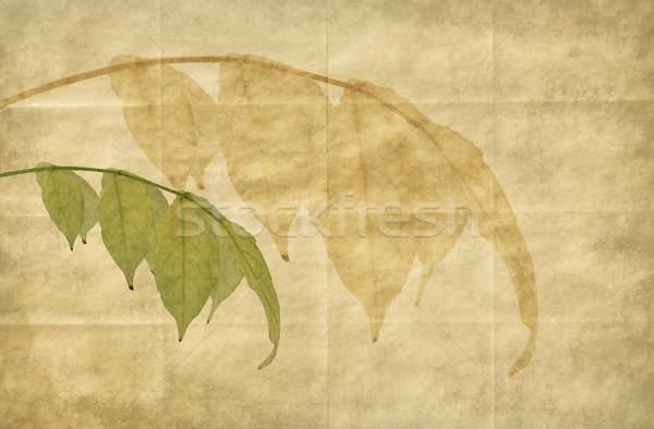 紙 古い紙 テクスチャ 自然 葉 ストックフォト © newt96