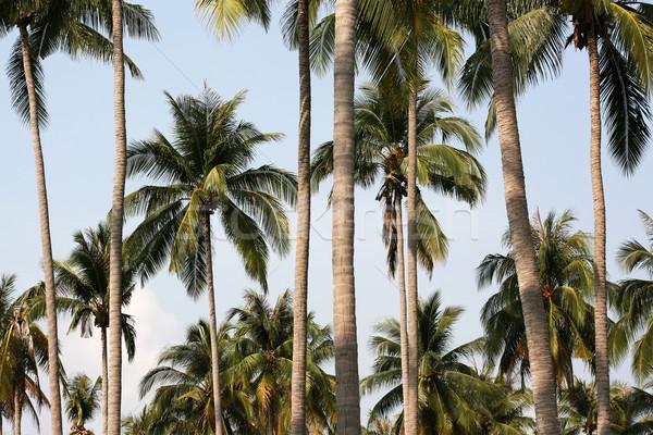 雨林 熱帯 グループ 手のひら 水平な ストックフォト © newt96