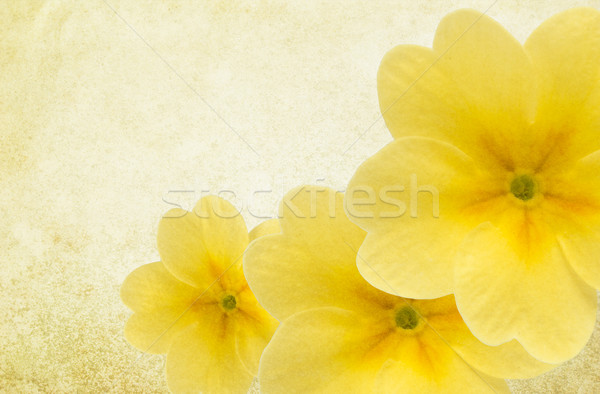 Textured Background with Yellow Flowers Stock photo © newt96