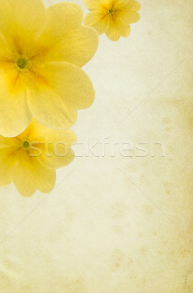 Yellow Paper Background with Flowers Stock photo © newt96