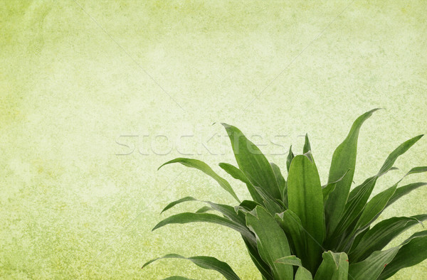 Green Vintage Background with Plant Stock photo © newt96
