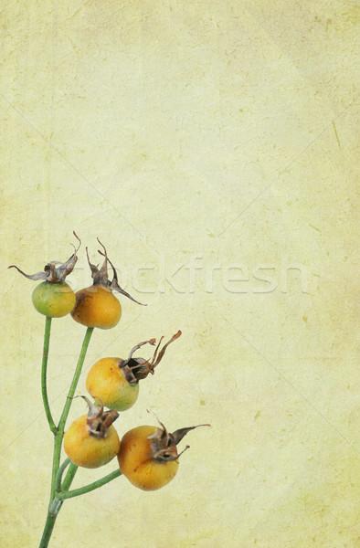 Pęknięty papieru róż vintage szczegółowy tekstury Zdjęcia stock © newt96