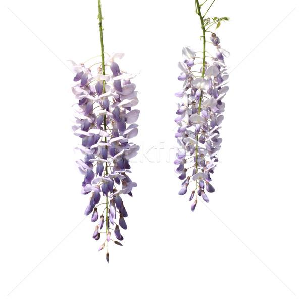 Zdjęcia stock: Dwa · kwiaty · drzewo · biały · kopia · przestrzeń