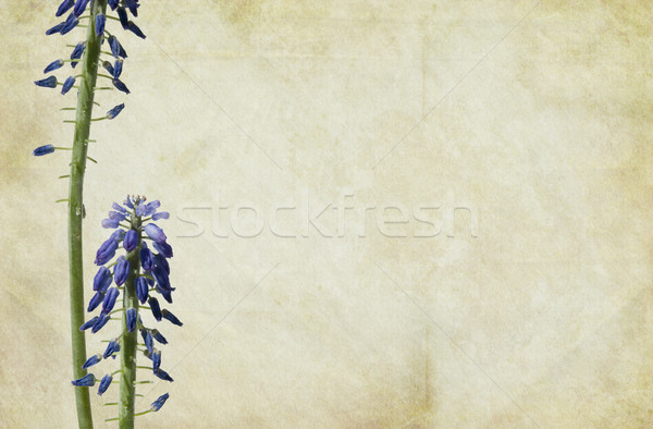 Kwiaty vintage kwiat papieru tekstury Zdjęcia stock © newt96