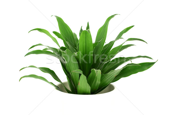 Home Plant Growing from 'Nowhere' Stock photo © newt96