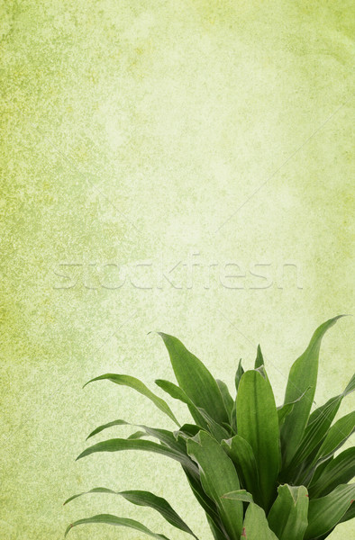 Green Vintage Paper Background with Plant Stock photo © newt96