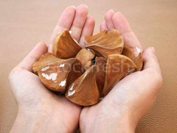 エキゾチック 手のひら 種子 女性 手 手 ストックフォト © newt96