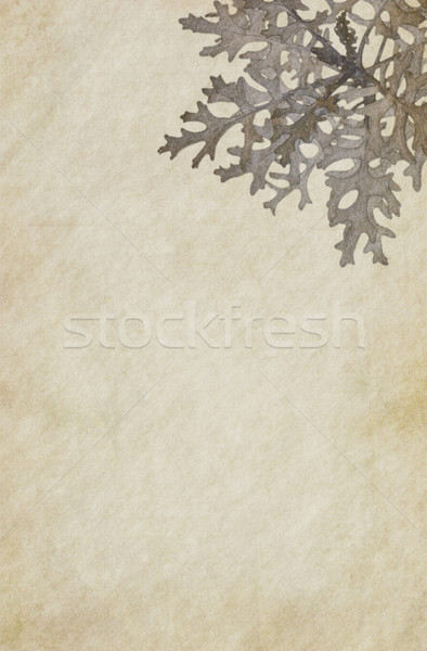Washed Out Paper Stock photo © newt96