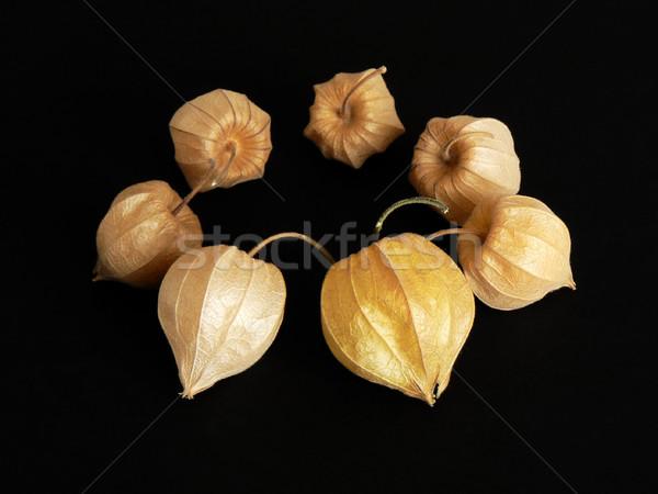 サークル 果物 フォーカス フォアグラウンド 装飾的な 秋 ストックフォト © newt96