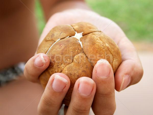 Obrane egzotyczny dłoni nasion strony charakter Zdjęcia stock © newt96