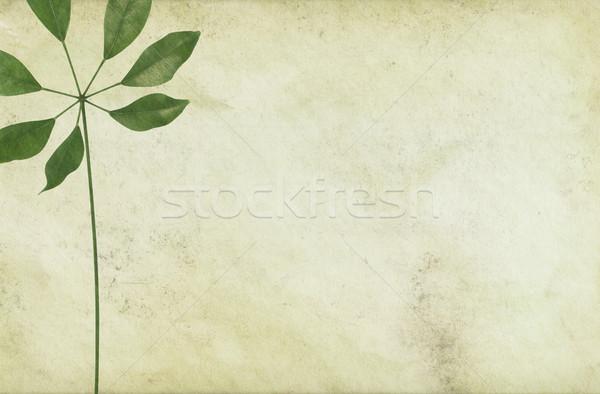 長い 紙 ヴィンテージ 葉 花 抽象的な ストックフォト © newt96