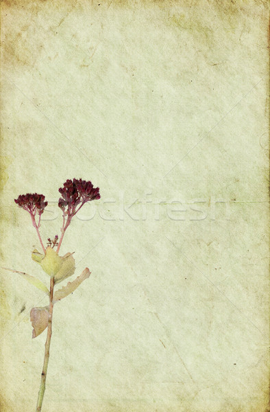 Old Dirty Paper Background with Faded Flower Stock photo © newt96