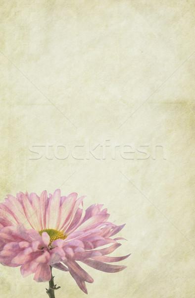 花 紙 ソフト ヴィンテージ 詳しい テクスチャ ストックフォト © newt96