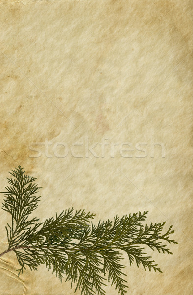 Old Paper with Thuja Twig Stock photo © newt96