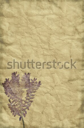 Vintage Paper Background Stock photo © newt96