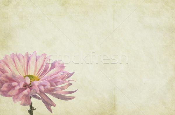 Kwiat papieru miękkie vintage charakter liści Zdjęcia stock © newt96