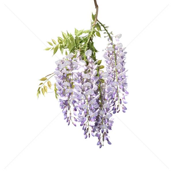 Oddziału drzewo piękna kwiaty Zdjęcia stock © newt96
