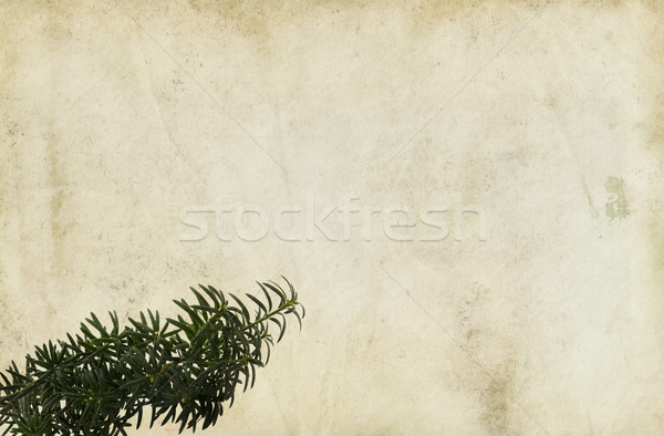 Conifer Branch on Paper Background Stock photo © newt96