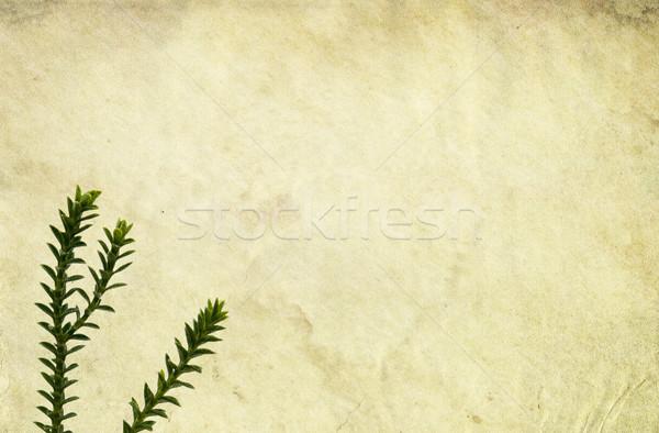 着色した 古い 紙 花 抽象的な 葉 ストックフォト © newt96
