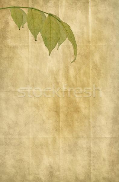 紙 古い紙 詳しい キャンバス テクスチャ ストックフォト © newt96