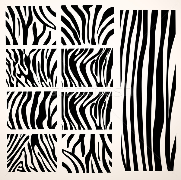 set of Vector zebra texture Black and White Stock photo © nezezon
