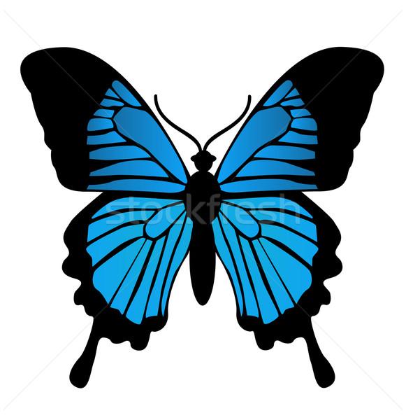 Farfalla bellezza estate nero colore tropicali Foto d'archivio © nezezon
