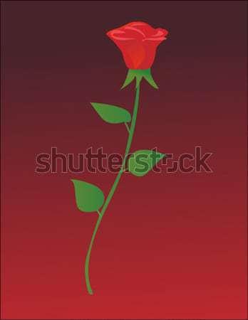 Rosa vermelha flor amor rosa beleza pintura Foto stock © nezezon