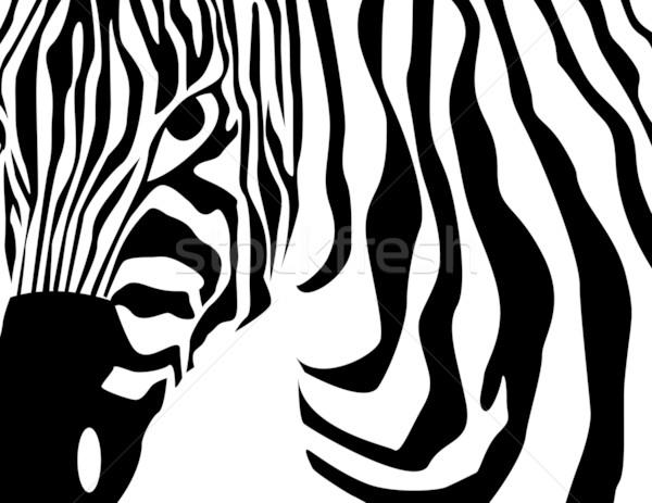 zebra vector Stock photo © nezezon