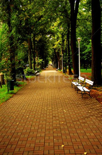Verde prato città parco sereno luce Foto d'archivio © nezezon