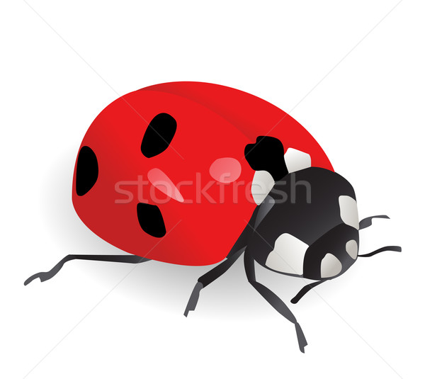 Vector illustration of a ladybug Stock photo © nezezon