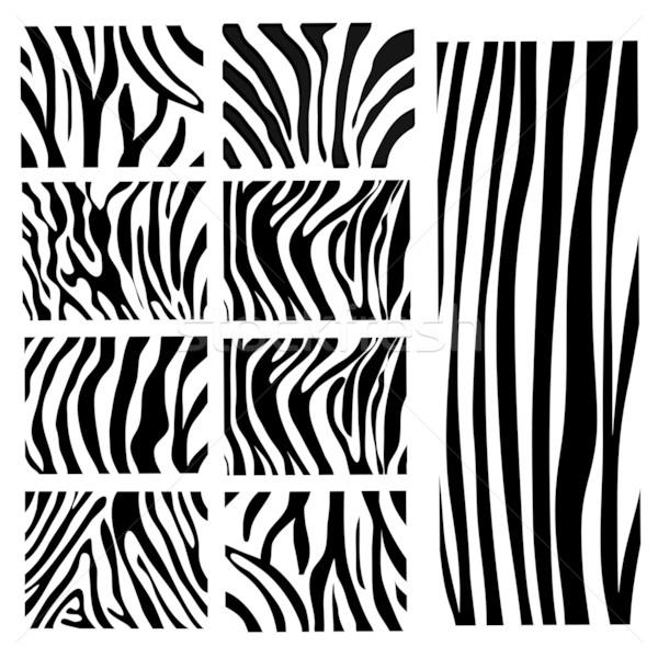 セット ベクトル シマウマ テクスチャ 黒白 自然 ストックフォト © nezezon