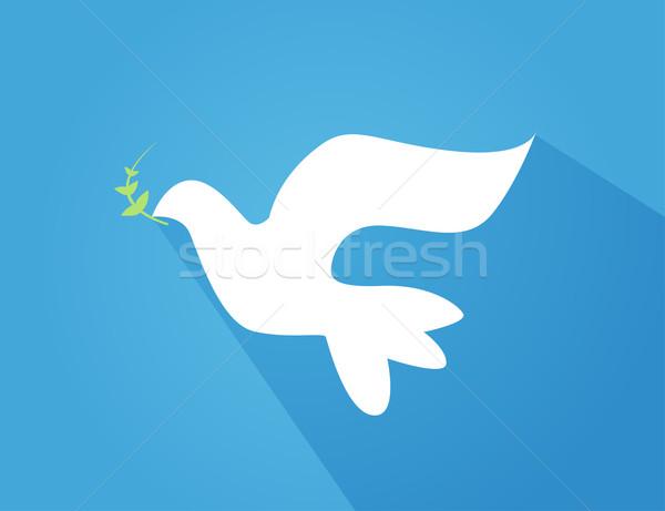 Güvercin zeytin şube güzel parlak beyaz Stok fotoğraf © nezezon