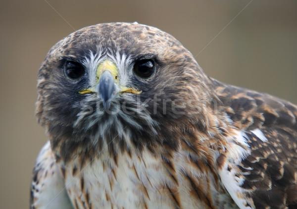 赤 クローズアップ 肖像 鳥 ストックフォト © nialat