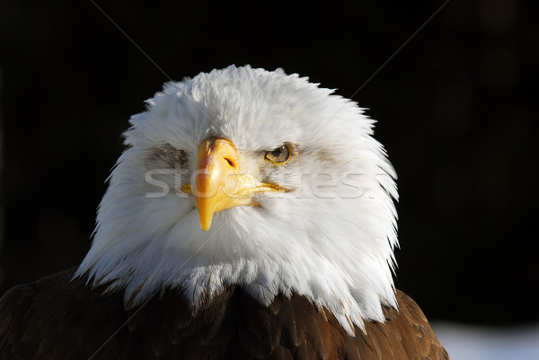 Amerikan kel kartal resim özgürlük Stok fotoğraf © nialat