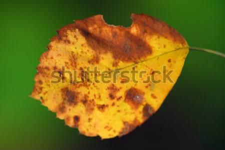 Sonbahar yaprak ağaç turuncu yeşil Stok fotoğraf © nialat