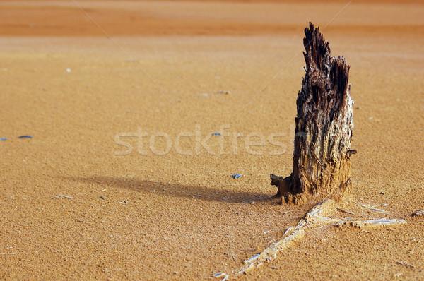 Opwarming van de aarde foto wat kan boom woestijn Stockfoto © nialat
