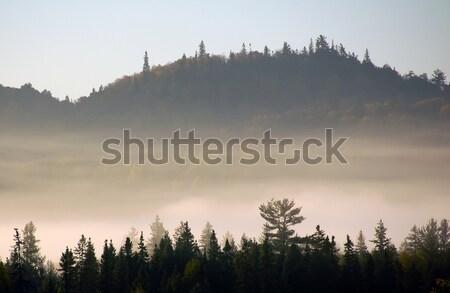 пейзаж тумана красивой утра туман воды Сток-фото © nialat