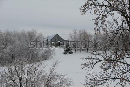 Winter scene Stock photo © nialat
