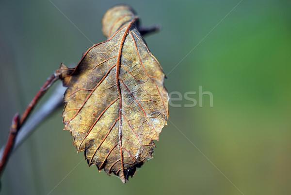 秋 葉 クローズアップ ツリー 自然 緑 ストックフォト © nialat