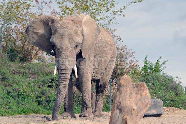 象 画像 ビッグ 晴れた 夏 日 ストックフォト © nialat