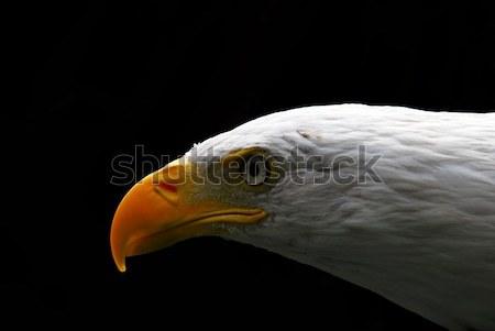 はげ イーグル クローズアップ 肖像 アメリカン ストックフォト © nialat