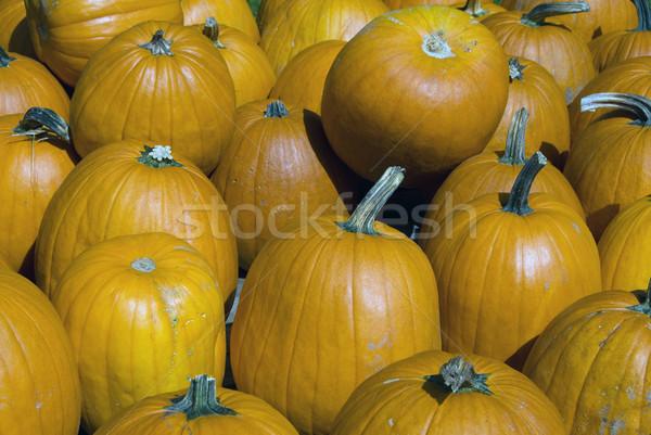 スカッシュ 画像 いくつかの 収穫 時間 秋 ストックフォト © nialat
