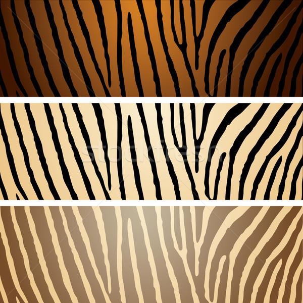 Zebra variação coleção três padrões Foto stock © nicemonkey