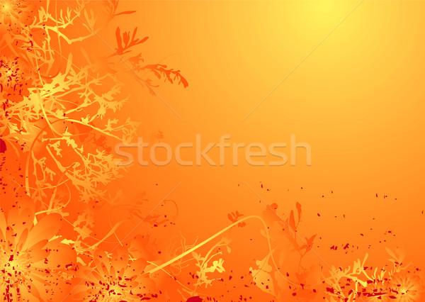floral mellow orange Stock photo © nicemonkey