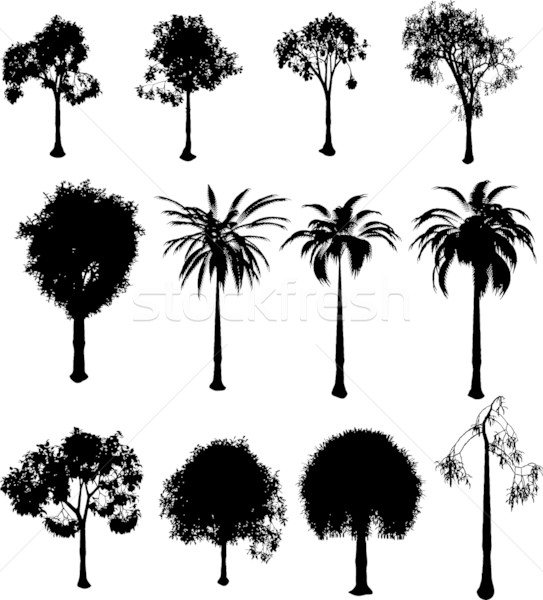 Stockfoto: Silhouet · bomen · collectie · witte · boom · gras