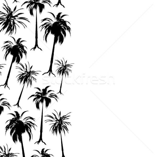 Stockfoto: Palm · grens · palmboom · zwart · wit · exemplaar · ruimte · abstract